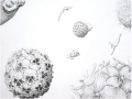 <strong>Detail (Heaven)</strong>Pencil on Paper, 150 x 260 cm, 2003 / 2004